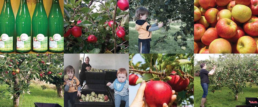 Luceys Good Food Farm and Produce