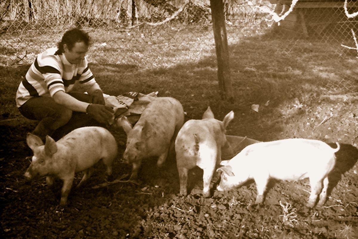 Ian Lucey at the Luceys Farm with Pigs